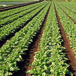 次世代農業ビジネス